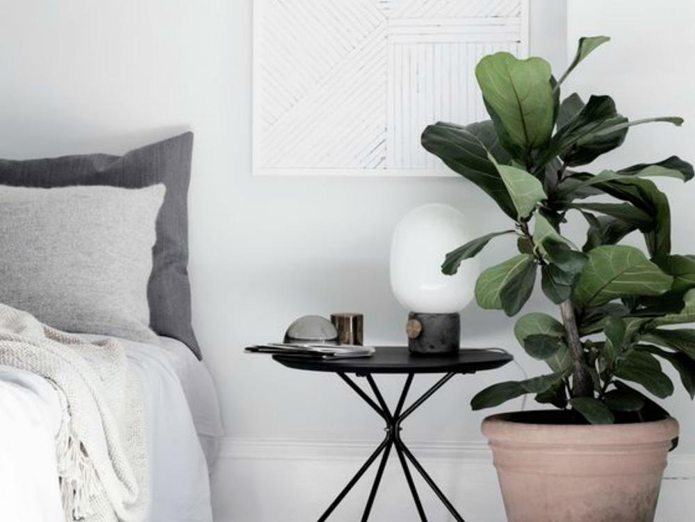 planter til soveværelset