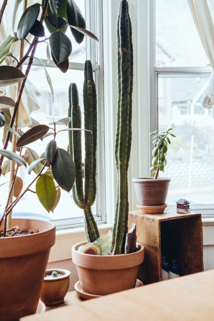 Altomindretning_indretning potteplanter_2