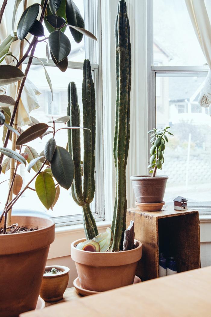 Ideer til styling med planter og potter i hjemmet   altomindretning.dk