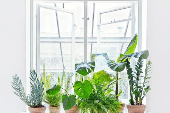 Planter_indretning_altomindretning-001