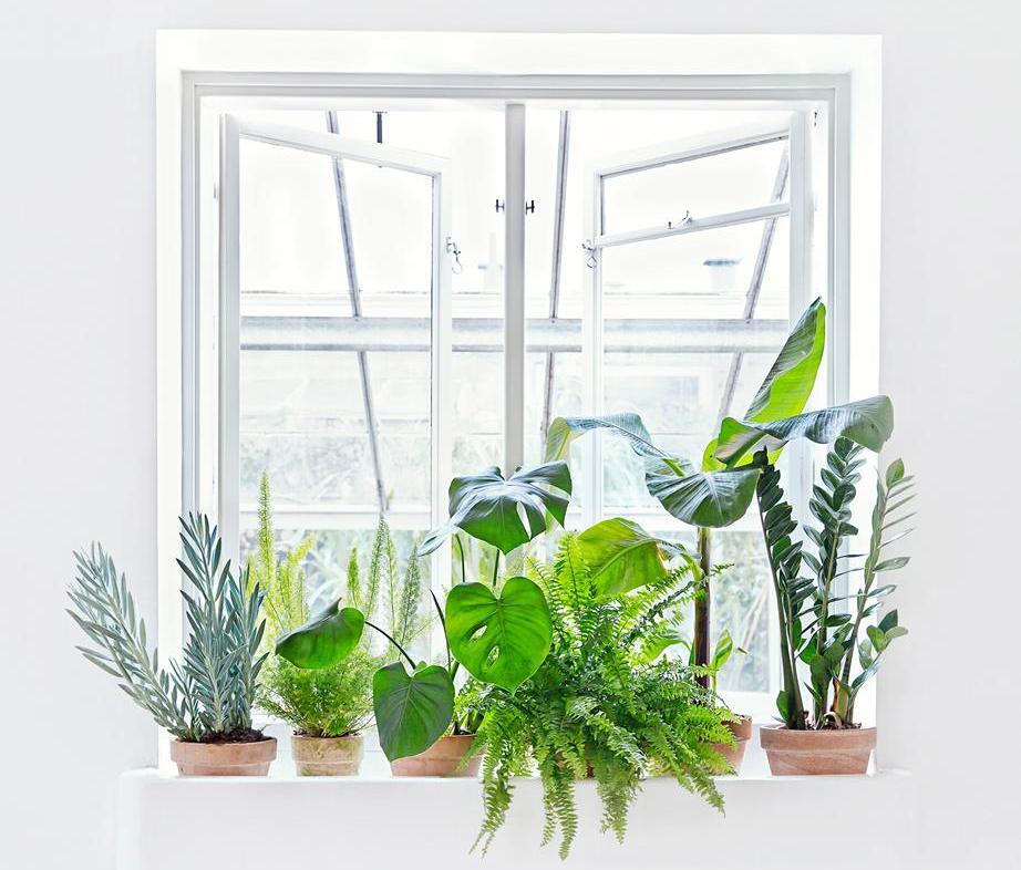 4 ideer til planter i hjemmet for Planter til koidam